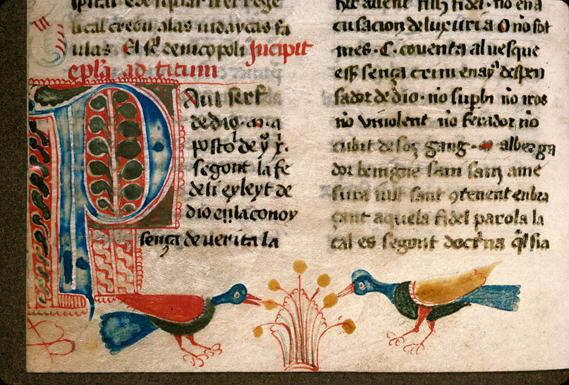 Carpentras, Bibl. mun., ms. 0008, f. 216v