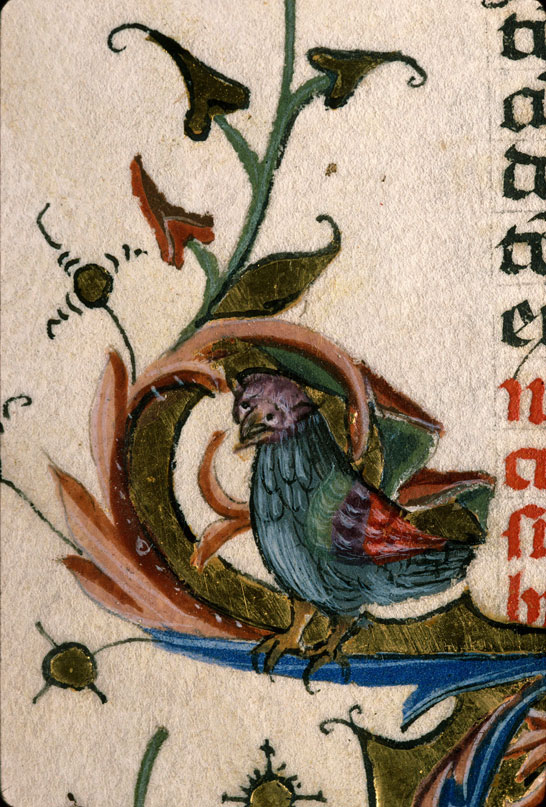 Carpentras, Bibl. mun., ms. 0322, f. 135v - vue 2