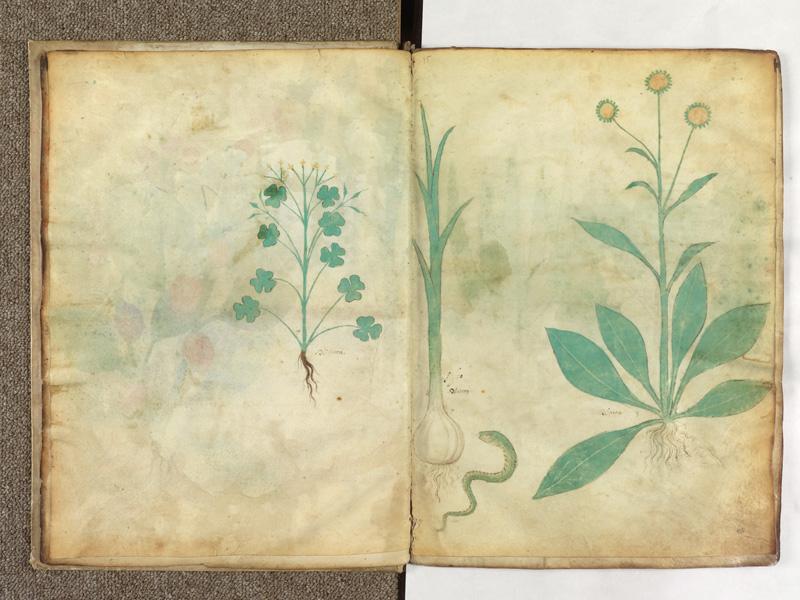 PARIS, Bibliothèque de l'Ecole des Beaux-Arts, Ms.Mas 0116, f. 007v - 008