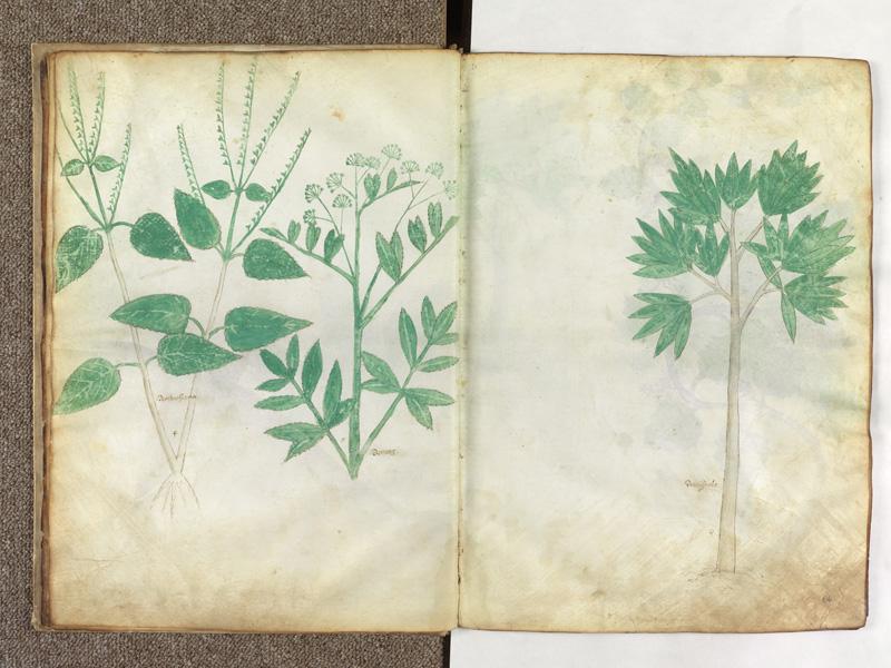 PARIS, Bibliothèque de l'Ecole des Beaux-Arts, Ms.Mas 0116, f. 010v - 011