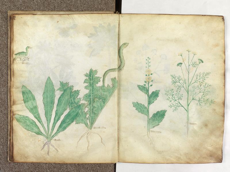 PARIS, Bibliothèque de l'Ecole des Beaux-Arts, Ms.Mas 0116, f. 012v - 013
