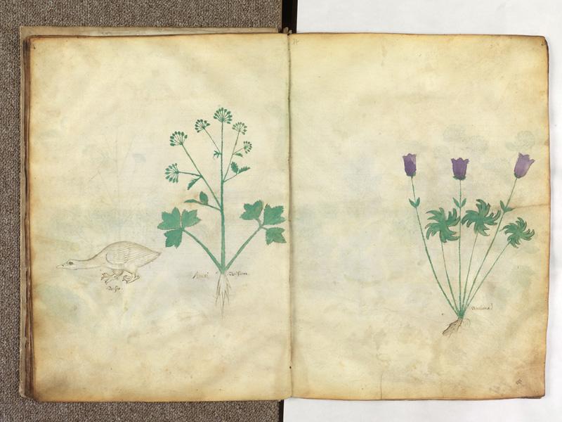 PARIS, Bibliothèque de l'Ecole des Beaux-Arts, Ms.Mas 0116, f. 013v - 014