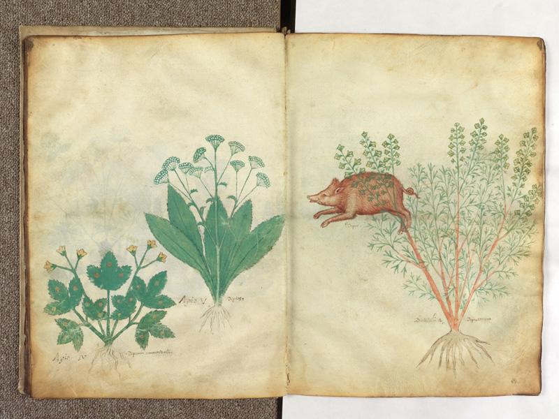 PARIS, Bibliothèque de l'Ecole des Beaux-Arts, Ms.Mas 0116, f. 015v - 016