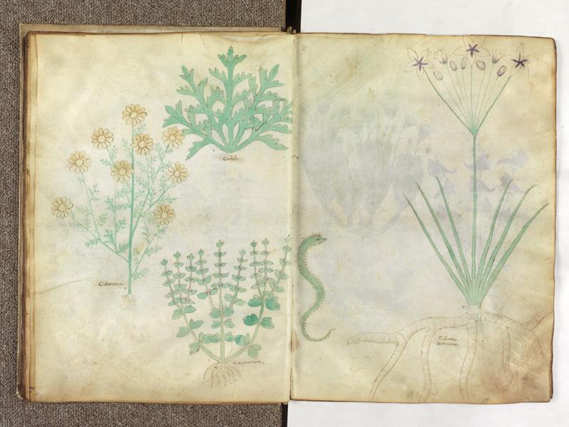 PARIS, Bibliothèque de l'Ecole des Beaux-Arts, Ms.Mas 0116, f. 018v - 019