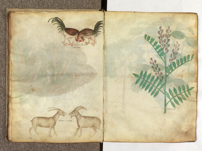 PARIS, Bibliothèque de l'Ecole des Beaux-Arts, Ms.Mas 0116, f. 025v - 026