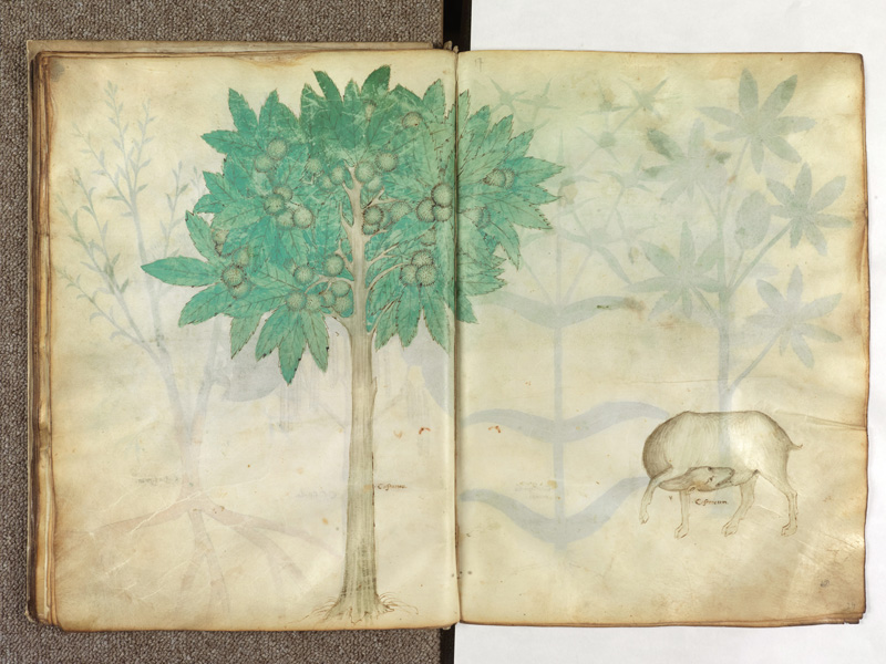 PARIS, Bibliothèque de l'Ecole des Beaux-Arts, Ms.Mas 0116, f. 028v - 029